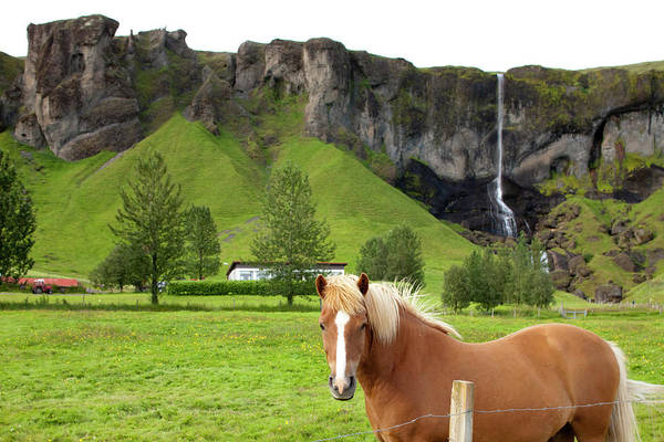 Scenics Art Print featuring the photograph Icelandic Horse And Waterfall, Vik by Paul Souders