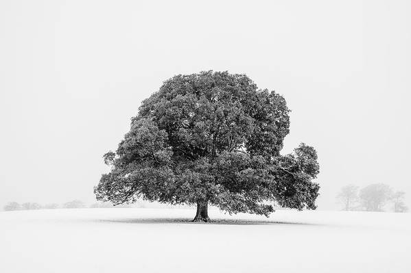 Scenics Art Print featuring the photograph Lone Holm Oak Tree In Snow, Somerset, Uk by Nick Cable