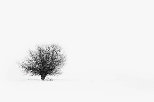 Tranquility Art Print featuring the photograph Lone Tree by Jrj-photo