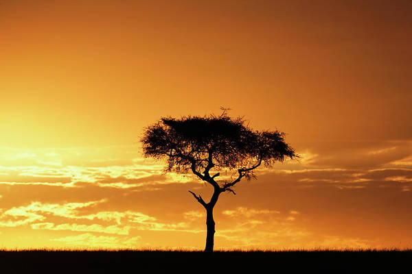 Tranquility Art Print featuring the photograph Masai Mara National Game Reserve, Kenya by William Manning