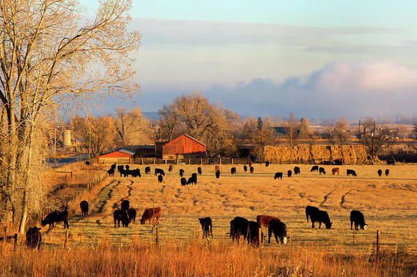 Scenics Art Print featuring the photograph Morning Farm Scene by Beklaus