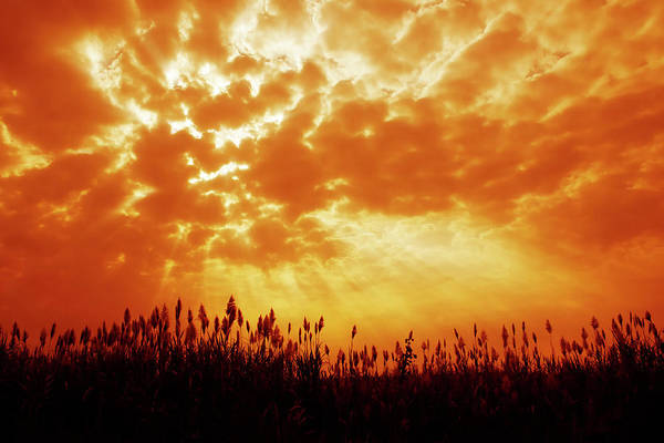 Orange Color Art Print featuring the photograph Orange Tinted Sky Illustrating by Tommyix
