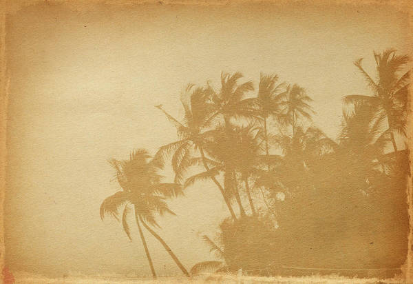 Aging Process Art Print featuring the photograph Palm Paper by Nic taylor