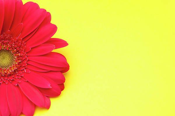 Petal Art Print featuring the photograph Pink Gerbera Daisy On Yellow Background by Jill Fromer