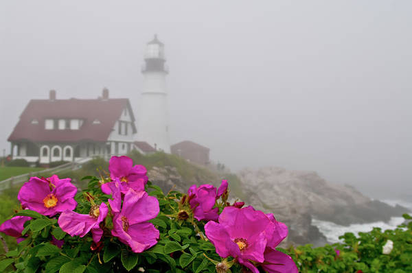 Built Structure Art Print featuring the photograph Portland Headlight With Rosa Rugosa And by Www.cfwphotography.com