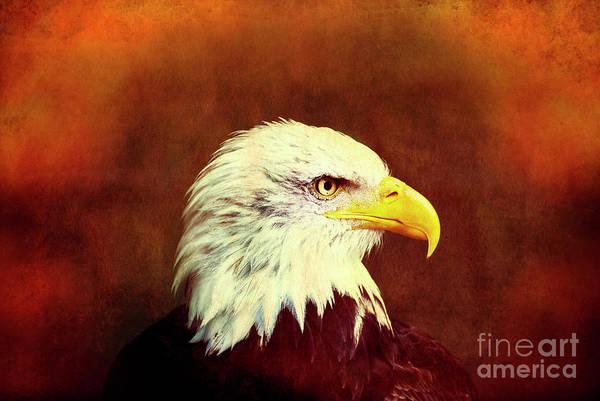 Art Art Print featuring the photograph Profile Eagle Grunge by Zuberka
