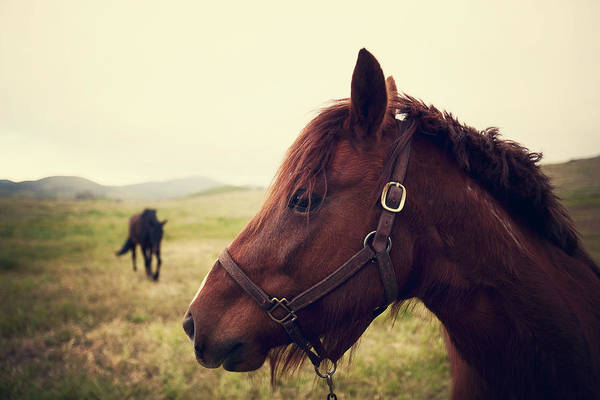 Horse Art Print featuring the photograph Profile Of Brown Horse In Meadow by Shari Weaver Photography