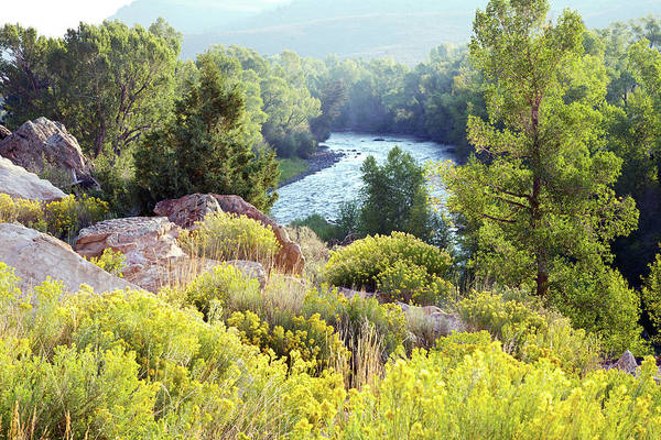 Water's Edge Art Print featuring the photograph River And Backlit Yellow Flowers In by Beklaus