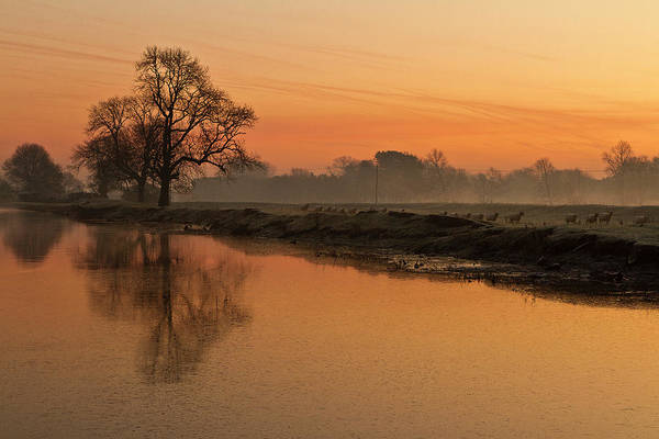 Scenics Art Print featuring the photograph Sheep Sunrise by Paulscreen