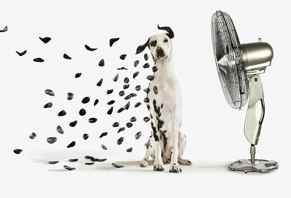 Pets Art Print featuring the photograph Spots Flying Off Dalmation Dog by Gandee Vasan