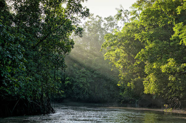Tropical Rainforest Art Print featuring the photograph Sunlight Shining Through Trees On River by Brasil2