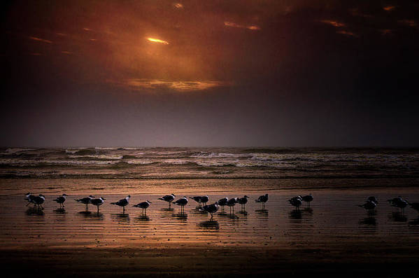 Water's Edge Art Print featuring the photograph Theres Gotta Be Food Around Here by Dean Fikar