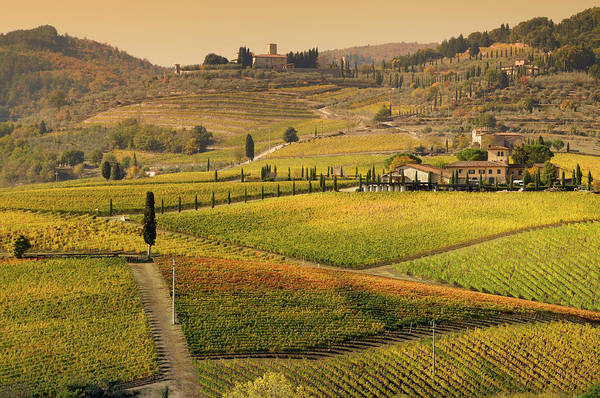 Scenics Art Print featuring the photograph Tuscany Farmhouse And Vineyard In Fall by Lisa-blue