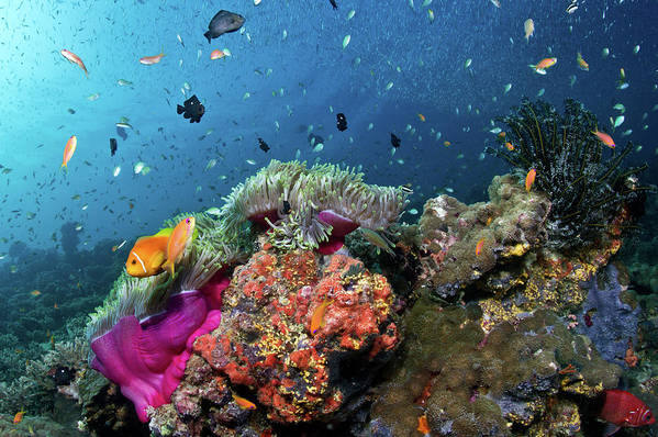 Underwater Art Print featuring the photograph Vibrant Lives by Lea Lee