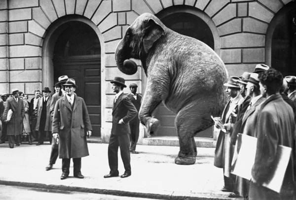 1930-1939 Art Print featuring the photograph Victory, The G.o.p. Elephant, Stands In by New York Daily News Archive