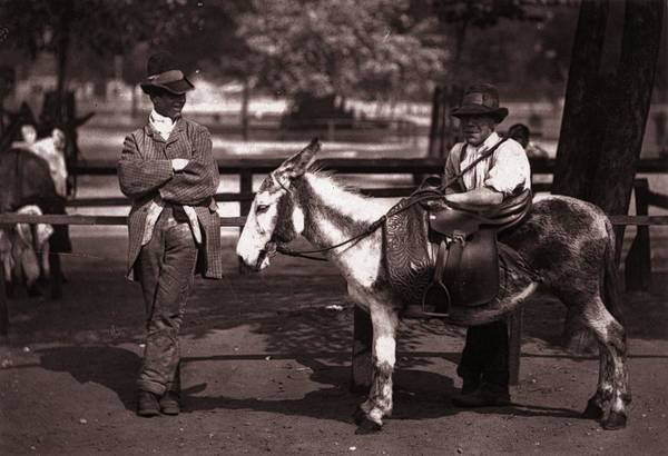 Horse Art Print featuring the photograph Waiting For A Hire by John Thomson