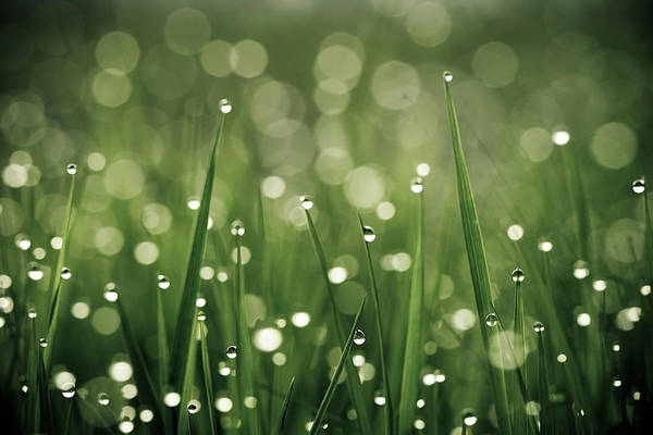 Grass Art Print featuring the photograph Water Drops On Grass by Florence Barreau
