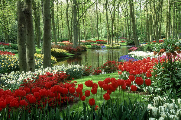 Flowerbed Art Print featuring the photograph Woods And Stream, Keukenhof Gardens by Robin Smith