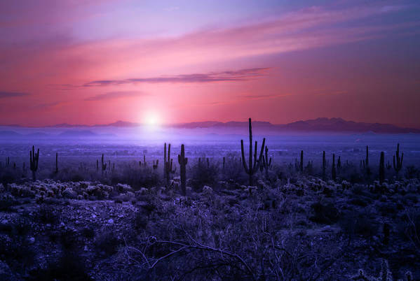 Sunrise Art Print featuring the photograph Arizona Sunrise by Jim Painter