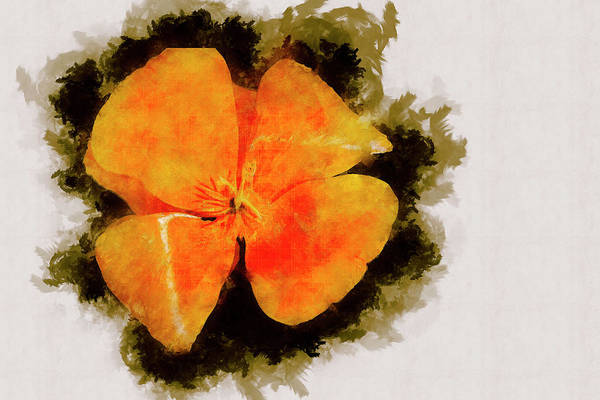 Flower Art Print featuring the photograph California Color ... by Judy Foote-Belleci