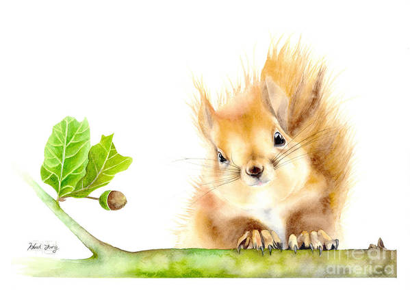 Fuzzy Squirrel Watercolor by Hwi Jung