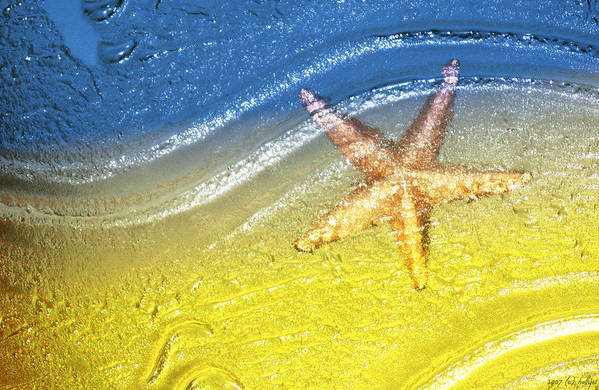 Starfish Art Print featuring the photograph Going With the Flow by Holly Kempe
