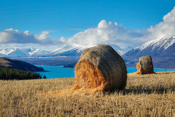 Tekapo Art Print featuring the photograph Lake Tekapo with hay bales and mountain background by Lingxiao Xie