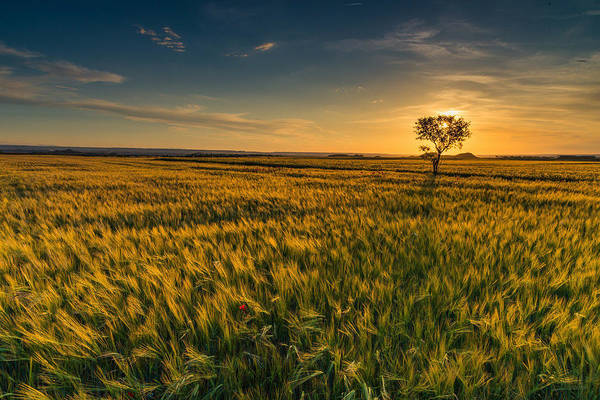 Tranquility Art Print featuring the photograph Scenic View Of Farm Against Sky During Sunset by Ralf Schastok / EyeEm