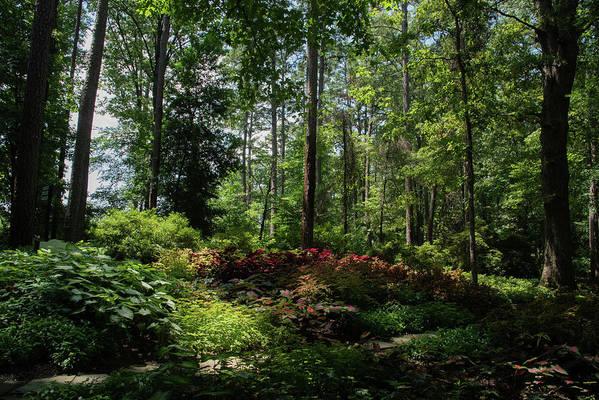 Arkansas Art Print featuring the photograph Sunlit Garden by Lea Rhea Photography