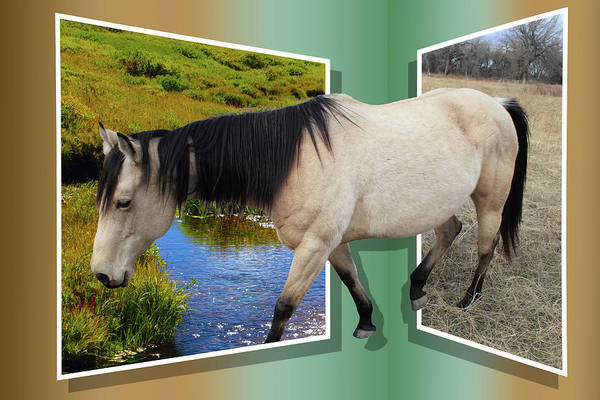 Horse Art Print featuring the photograph The Grass Is Always Greener On The Other Side by Shane Bechler
