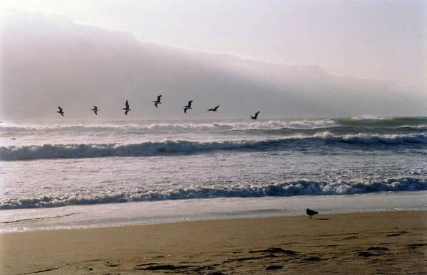 Seascape Art Print featuring the photograph Pelican Brief by Brande Barrett