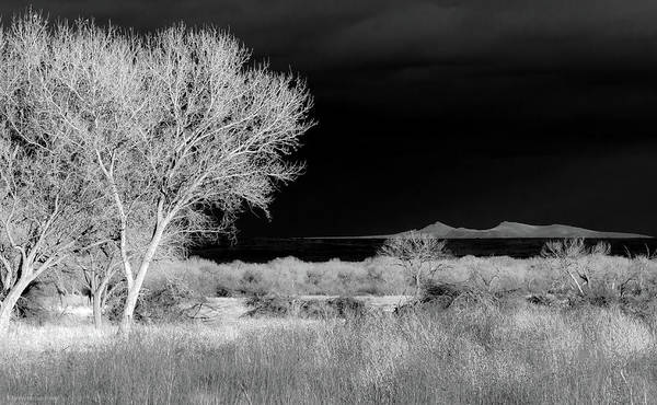 Infrared Art Print featuring the photograph Bosque Del Apache - Infrared by Britt Runyon