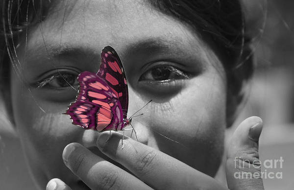 Butterfly Art Print featuring the photograph Nosey by Katherine Morgan