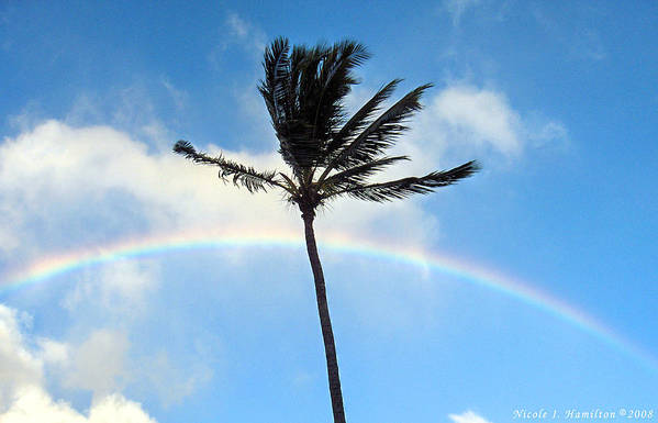 Palm Tree Art Print featuring the photograph Palm Tree in the Sky by Nicole I Hamilton