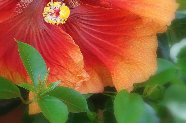 Flowers Art Print featuring the photograph Tropical Hibiscus by Cathy Mounts