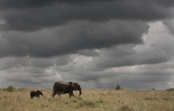 Kenya Art Print featuring the photograph Elephant Under Cloudy Sky by Buena Vista Images