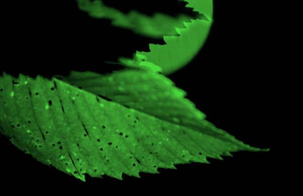Leaf Art Print featuring the photograph Green Leaf in Sun by Lonnie Paulson
