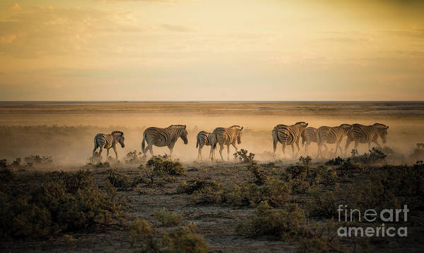 Dawn Art Print featuring the photograph Namibia, Etosha National Park, Herd by Westend61