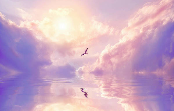 Fairy Tale Art Print featuring the photograph Seagull And Violet Clouds by Jane Khomi