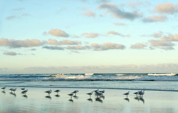 Working Art Print featuring the photograph Seagulls In Heaven V2 by Breecedownunder