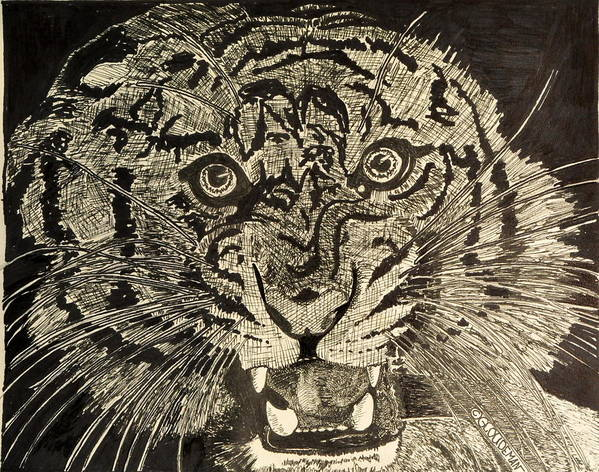 Tiger Art Print featuring the drawing Tiger by Denis Gloudeman