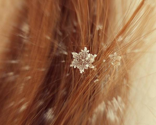 Winter Art Print featuring the photograph Fallen Flake by Candice Trimble