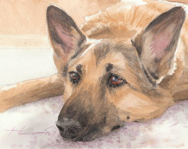 <a Href=http://miketheuer.com Target =_blank>www.miketheuer.com</a> German Shepherd Laying Watercolor Portrait Art Print featuring the drawing German Shepherd Laying Watercolor Portrait by Mike Theuer