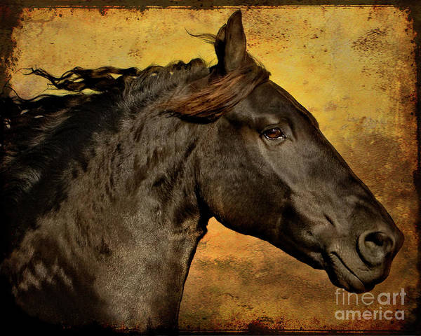 Friesian Art Print featuring the photograph Into the Sunset by Jean Hildebrant