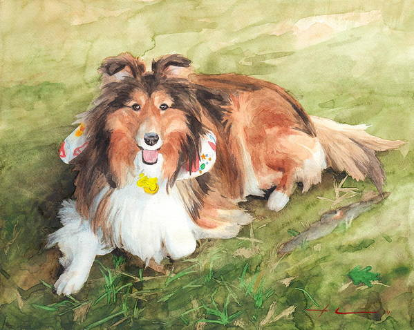 <a Href=http://miketheuer.com Target =_blank>www.miketheuer.com</a> Sheltie On Lawn Watercolor Portrait Art Print featuring the drawing Sheltie On Lawn Watercolor Portrait by Mike Theuer
