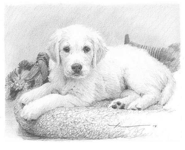 <a Href=http://miketheuer.com>www.miketheuer.com</a> White Puppy Pencil Portrait Art Print featuring the drawing White Puppy Pencil Portrait by Mike Theuer