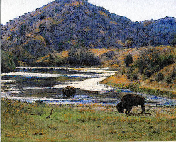 California Art Print featuring the mixed media Catalina Buffalo SOLD by Randy Sprout