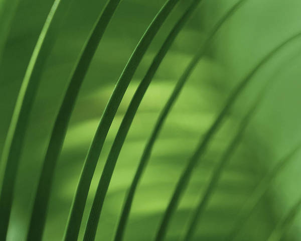 Green Art Print featuring the photograph Greens IV by Katherine Morgan