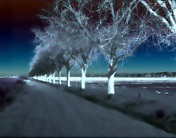 Trees Art Print featuring the photograph Pecan Trees by Jim Painter