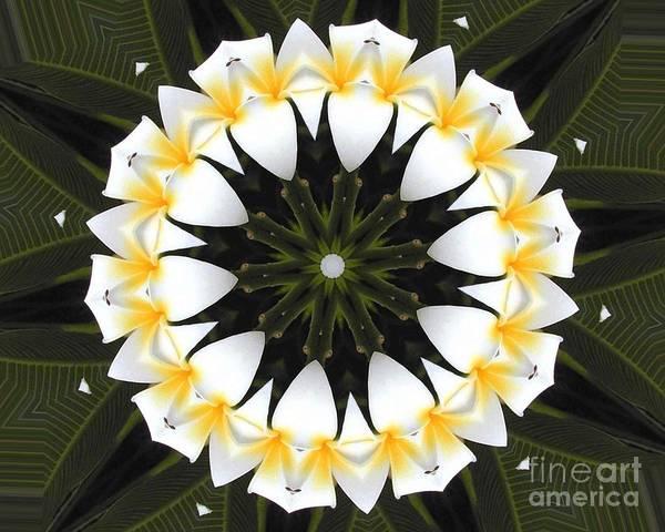 Plumeria Art Print featuring the photograph Plumeria 1 by Mark Gilman